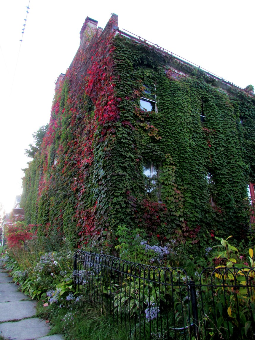 Ivy-covered house.